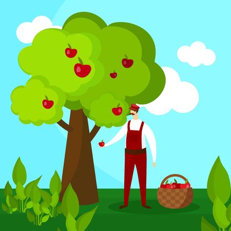 Man Farmer Pick Apple Harvest to Basket. Male Character Harvesting Ripe Fruit from Green Organic Tree on Country Garden Landscape Background. Ecological Nutrition. Cartoon Flat Vector Illustration. Illustration