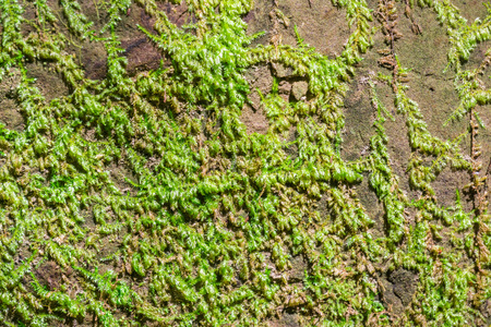 Moss growing on a rock Stock Photo