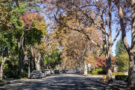 Tree-lined street in a residential neighborhood on a sunny autumn day, Palo Alto, San Francisco bay, California