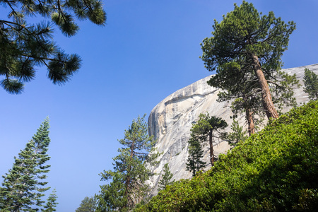 Landscape in Yosemite National Park with pine trees and steep granite dome on a blue sky background; Sierra Nevada mountains, California
