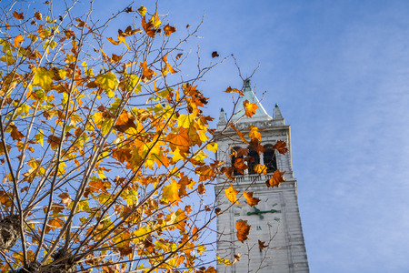 Autumn colored leaves on a blue sky background; Campanile (Sather tower) in the background, Berkeley, San Francisco bay, California Zdjęcie Seryjne