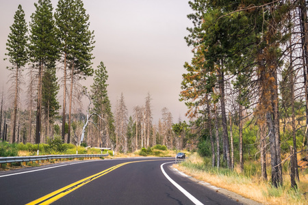 Driving through Yosemite National Park; filtered light due to the smoke coming from Ferguson Fire covering the sky, California