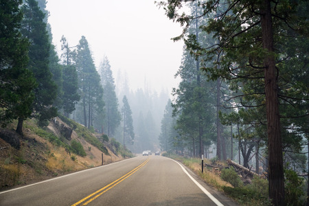 Driving through a forest in Yosemite National Park; heavy smoke from Ferguson Fire covering the sky, California