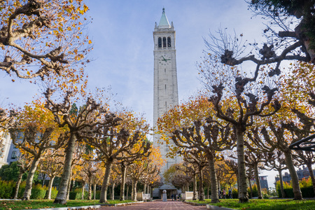 Alley lined up with autumn colored trees; Sather (Campanile) tower in the background, Berkeley, San Francisco bay, California Фото со стока