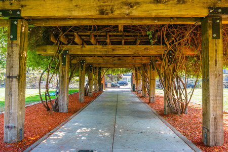 Wooden pergola covered by a thick arbor, San Jose Municipal Rose Garden, south San Francisco bay area, California