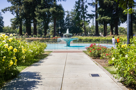 Paved alley lined up with blooming roses and water fountain in the Municipal Rose Garden, San Jose, south San Francisco bay area, California Stock Photo