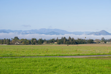 Green grass meadow; lingering fog in the background, Coyote Lake - Harvey Bear Park, Morgan Hill, California 免版税图像