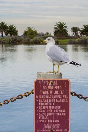 Seagull standing on top of a