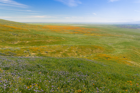 Wildflowers blooming on the hills in springtime, California 写真素材