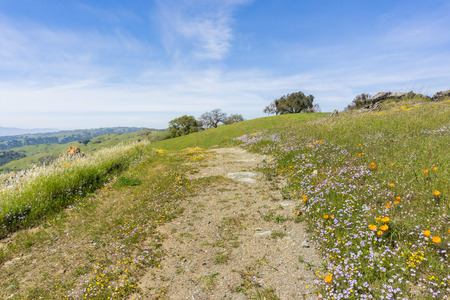 Hiking trail lined up with fresh green grass and colorful wildflowers, Henry W. Coe State Park, California Stock fotó