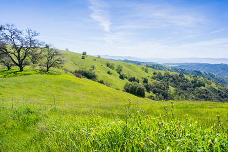 Verdant hills and valleys in Henry Coe state park, California