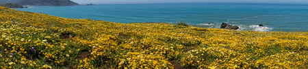 Panoramic view of the Superbloom at Mori Point, Pacifica, San Francisco bay, California