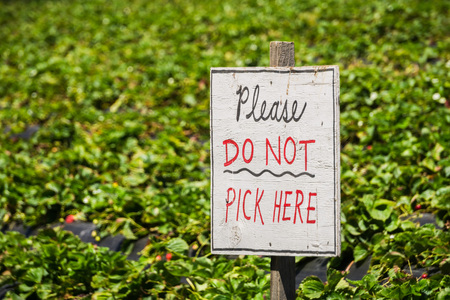 Please Do not Pick Here sign at an organic U-Pick strawberry farm, California