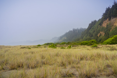 Foggy Coastal landscape in Prairie Creek Redwoods State Park, Northern California Stock fotó