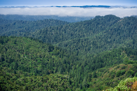 Fog lingering over the hills and valleys of Santa Cruz mountains, San Francisco bay area, California