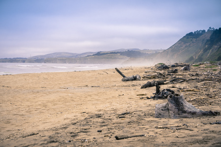 Driftwood on a sandy beach on the Pacific Ocean coastline on a foggy afternoon, California 写真素材