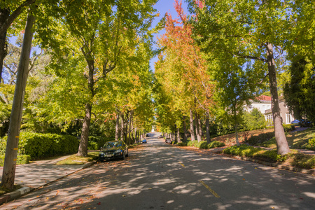 Tree-lined street in a residential neighborhood on a sunny autumn day, Oakland, San Francisco bay, California 写真素材