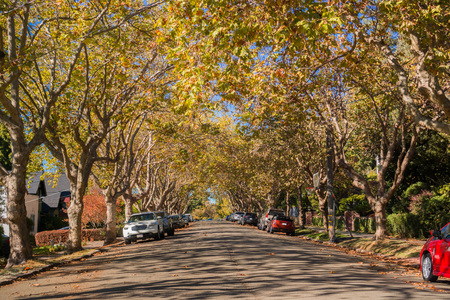 Tree-lined street in a residential neighborhood on a sunny autumn day, Oakland, San Francisco bay, California Archivio Fotografico