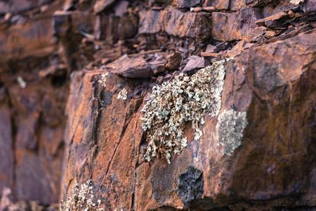 Lichens growing on Jurassic rock in Mt Diablo State Park, Contra Costa County, San Francisco bay area, California Stock Photo