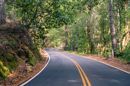Winding road going through a forest, Big Basin State Park, Santa Cruz mountains, San Francisco bay area, California