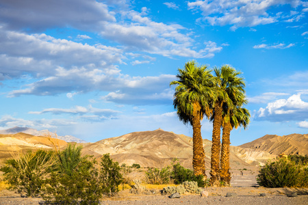 A group of palm trees on a mountains and blue sky background, Furnace Creek, Death Valley National Park, California Banco de Imagens