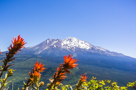 Mt Shasta summit covered in snow; Indian paintbrush (Castilleja) in bloom in the foreground, Siskiyou County, California Banco de Imagens