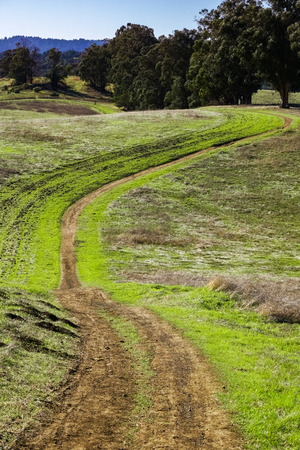 Hiking trail on rolling green hills, Arastradero Preserve, Palo Alto, California