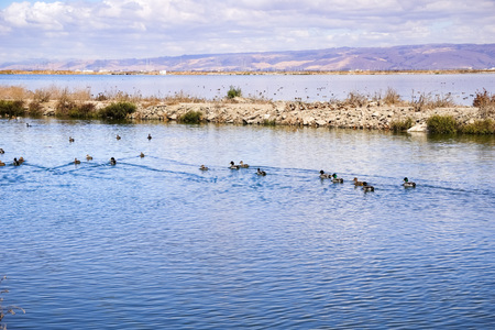 Waterfowl on the bay trail, Sunnyvale, California