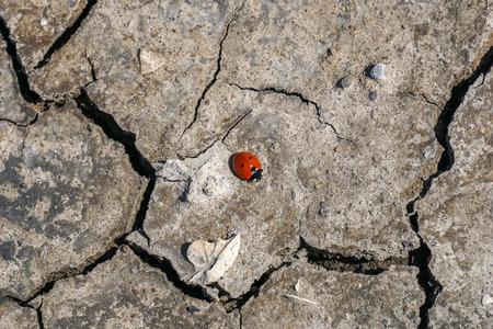 ladybug on a dry cracked ground Stock Photo