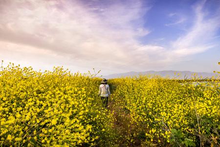 Unidentified person walking on a path lined up with Black mustard (Brassica nigra) wildflowers, San Jose, San Francisco bay area, California Фото со стока