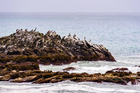 Brown Pelicans sitting on a rock, the Pacific Ocean coast, California