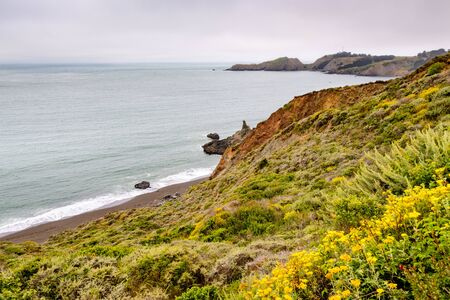 The Pacific Ocean coastline in Marin Headlands on a foggy day; Golden Yarrow (Eriophyllum confertiflorum) wildflowers blooming on the bluffs; Marin County, North San Francisco bay area, California Stock Photo