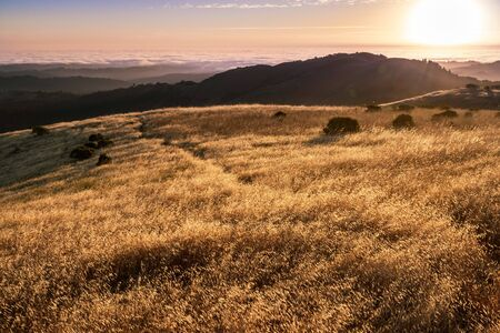 Dry grass shining in the sunset sun, sea of clouds visible in the background, Santa Cruz mountains, San Francisco bay area, California