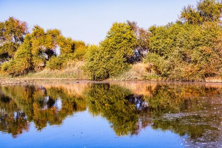 Trees reflected in the calm waters of the wetlands of Merced National Refuge on a sunny fall day; Central California