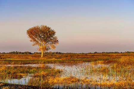 Sunset view of the wetlands of San Luis National Wildlife Refuge, Merced County, California