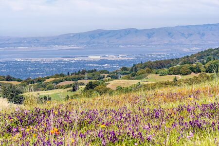 View towards Sunnyvale and Mountain View, part of Silicon Valley; green hills and wildflower field visible in the foreground; San Francisco Bay Area, California