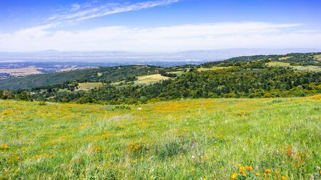Wildflower covered meadows and green hills in Santa Cruz mountains; Silicon Valley and the shoreline of South San Francisco bay, visible in the background; California
