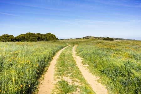 Dirt road through a field with tall grass and wildflowers on the hills of Santa Cruz mountains; California