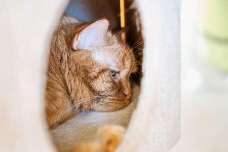 Close up of orange cat sleeping in box 免版税图像 - 151230330