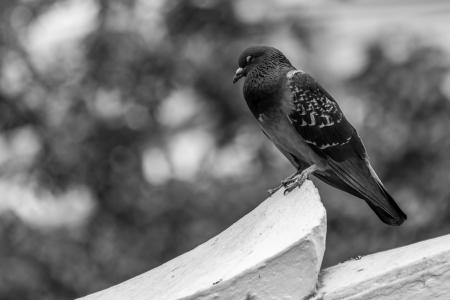 wildanimal: Bird on rooftop