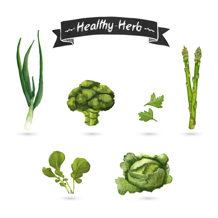 herbs: Set of herbs for food in a watercolor style. Isolated. Vector