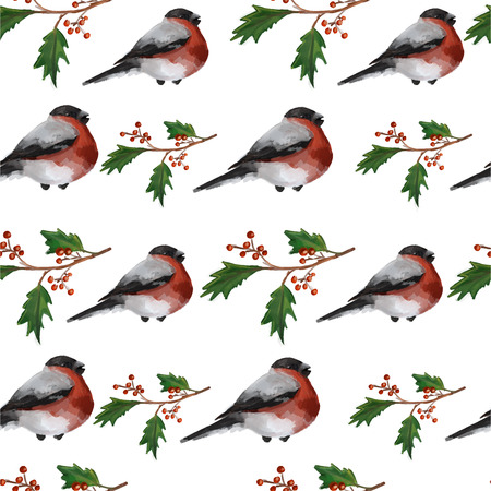 bullfinch: Christmas seamless background with holly berries and bullfinches on white background. Vector illustration