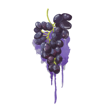purple grapes: Grapes in a watercolor style with purple watercolor splashes. Juicy, bright blob. Vector.