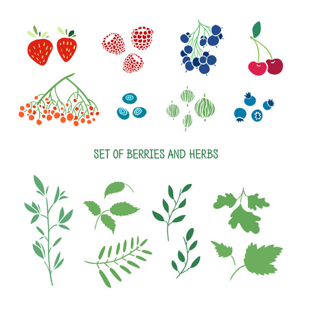 bunch of: Set of berries, herbs and plants. Simple colors.  Vector Illustration