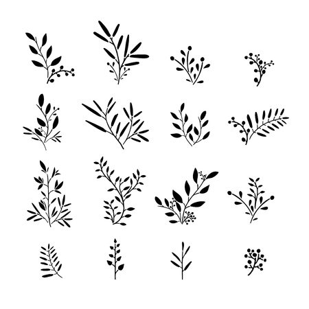 simple: Set of monochrome plant elements. Bouquets, kits, ornaments of grass, twigs, leaves and berries. Simple style. Hand drawn. Vector
