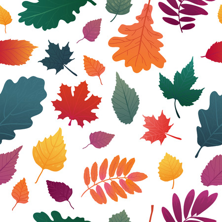 A Seamless background with autumn leaf pattern. Fall herb, twig on white background.  Oak and maple leaf graient color. Vector Illustration