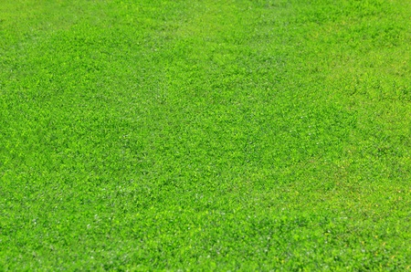 Abstract green grass background on the field photo