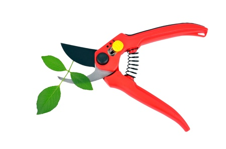 hedging: Red garden pruner and green leaf, isolated on a white background