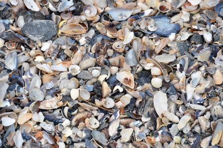 Shell and pebble stone for background texture photo