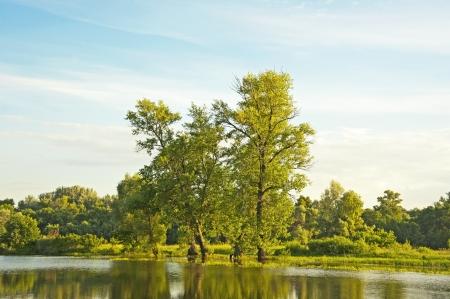 waterweed: Poplar tree over forest lake, Kiev, Ukraine Stock Photo